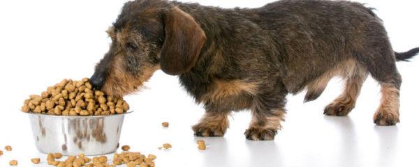 croquettes naturelles pour chiens